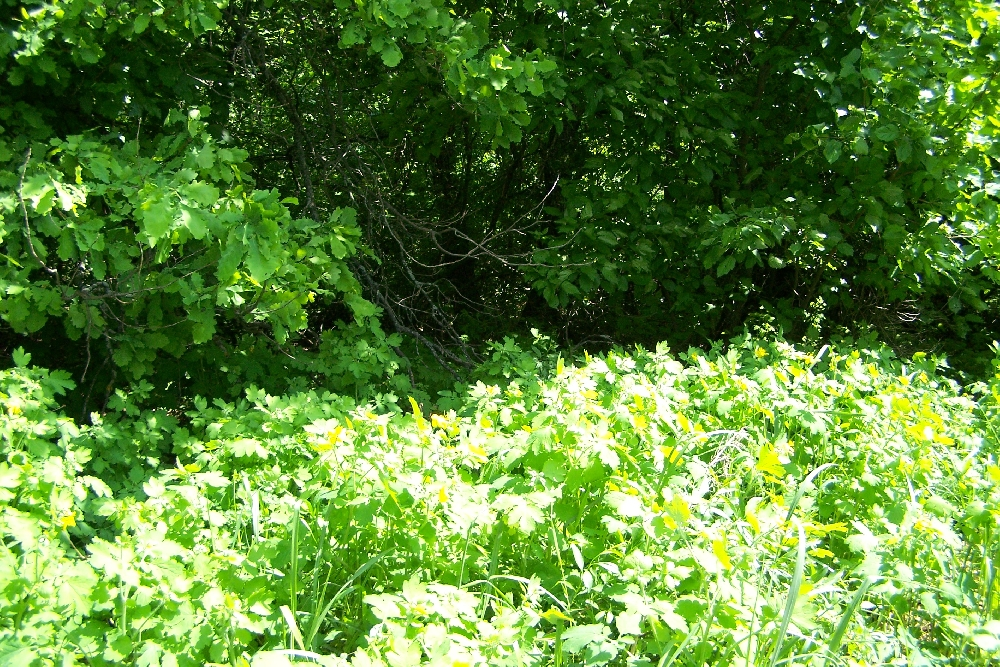 Алешкин лес