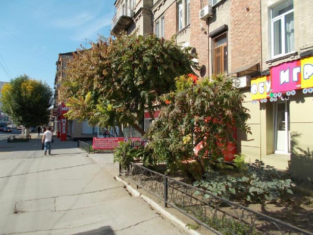 Уксусное дерево на улице Московской