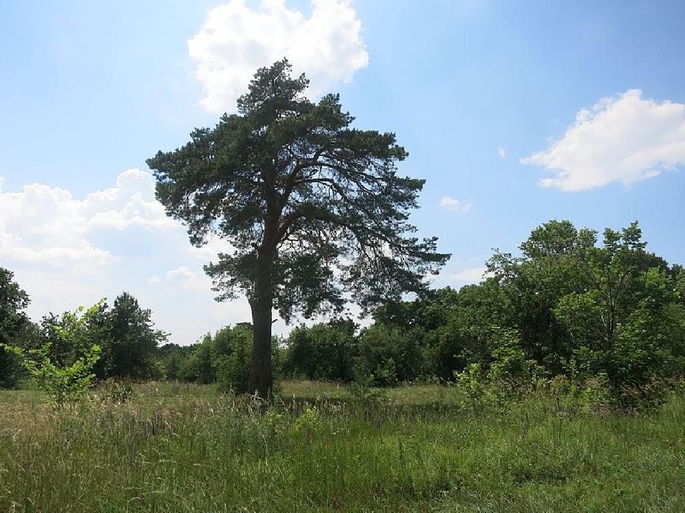 Фрагмент приусадебного парка Шахматовых