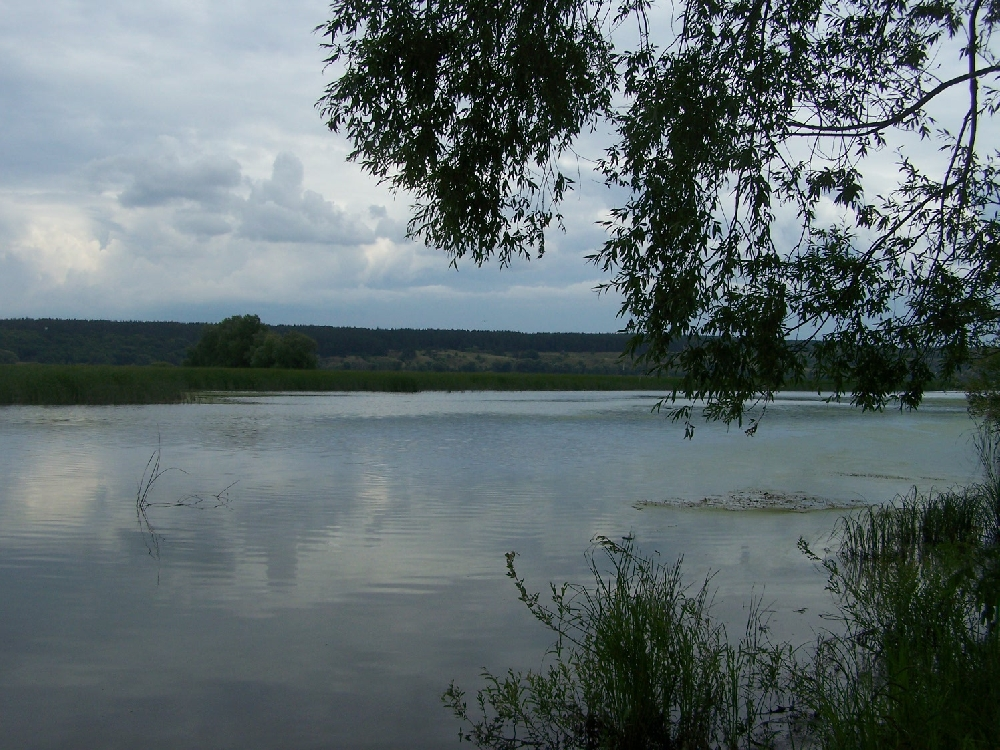 Устье реки Терешки