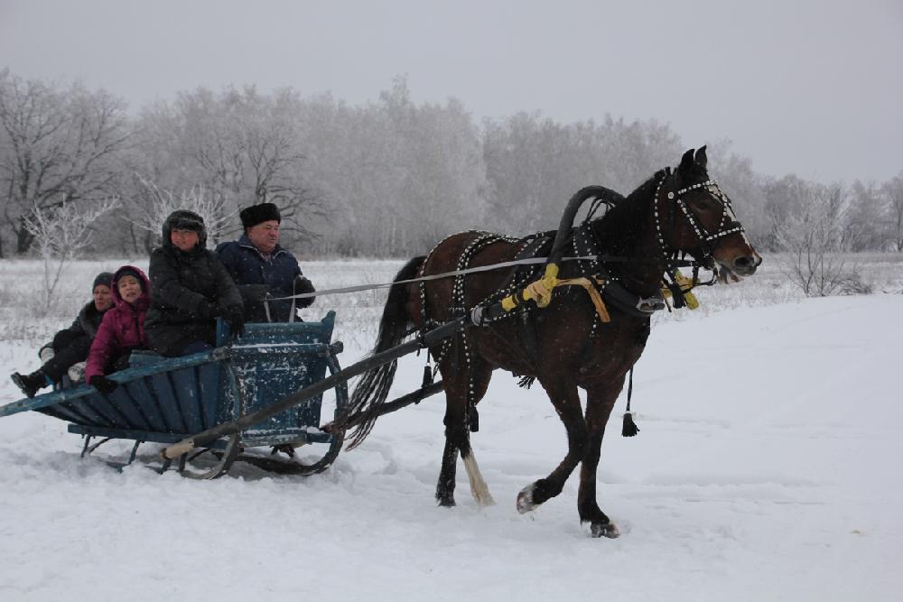 Катание на лошадях в Крылатом