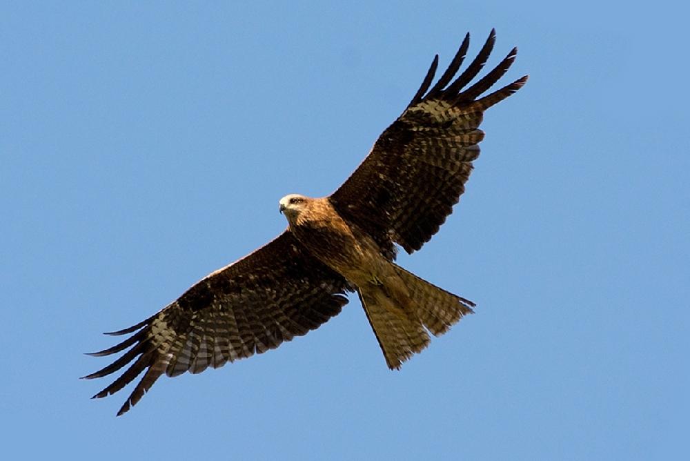 Фото с названиями хищных птиц тверской области