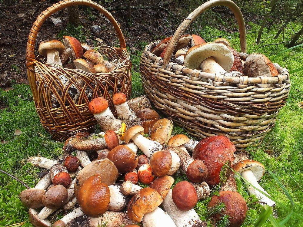 Лучшие грибные места Саратовской области