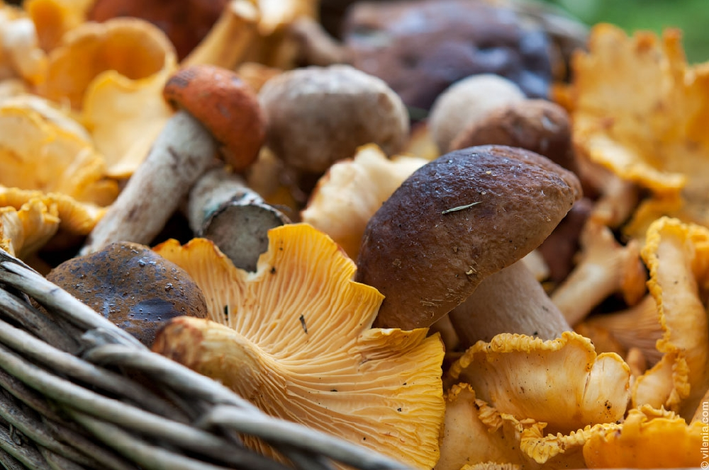 меня смотрели фото и названия всех видов грибов для