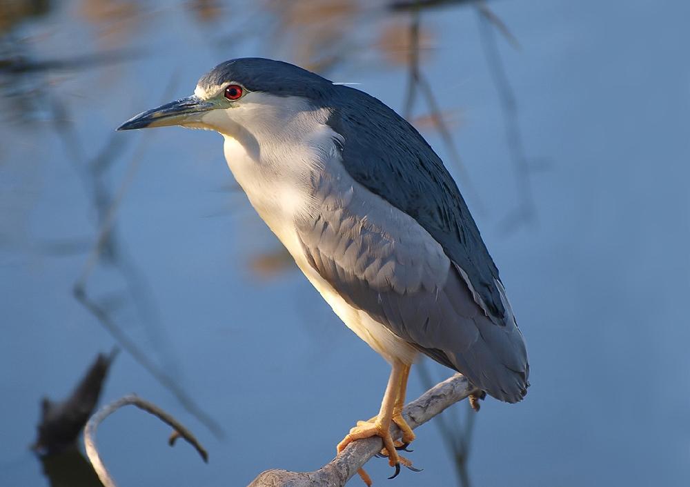 стараетесь придать фото птиц саратовской области заготовка виде