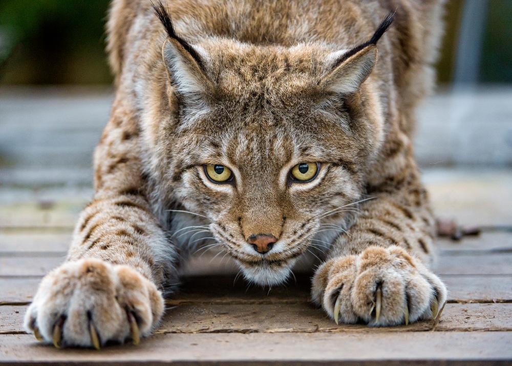 Волки, лисы и другие хищные животные Саратовской области