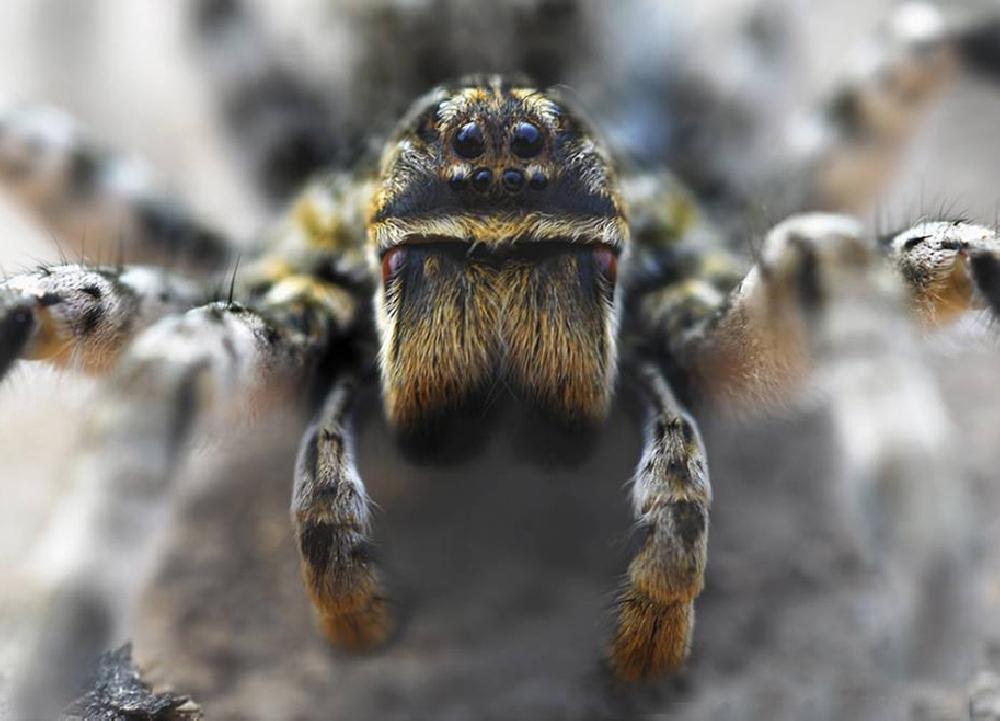Пауки и скорпионы Саратовской области