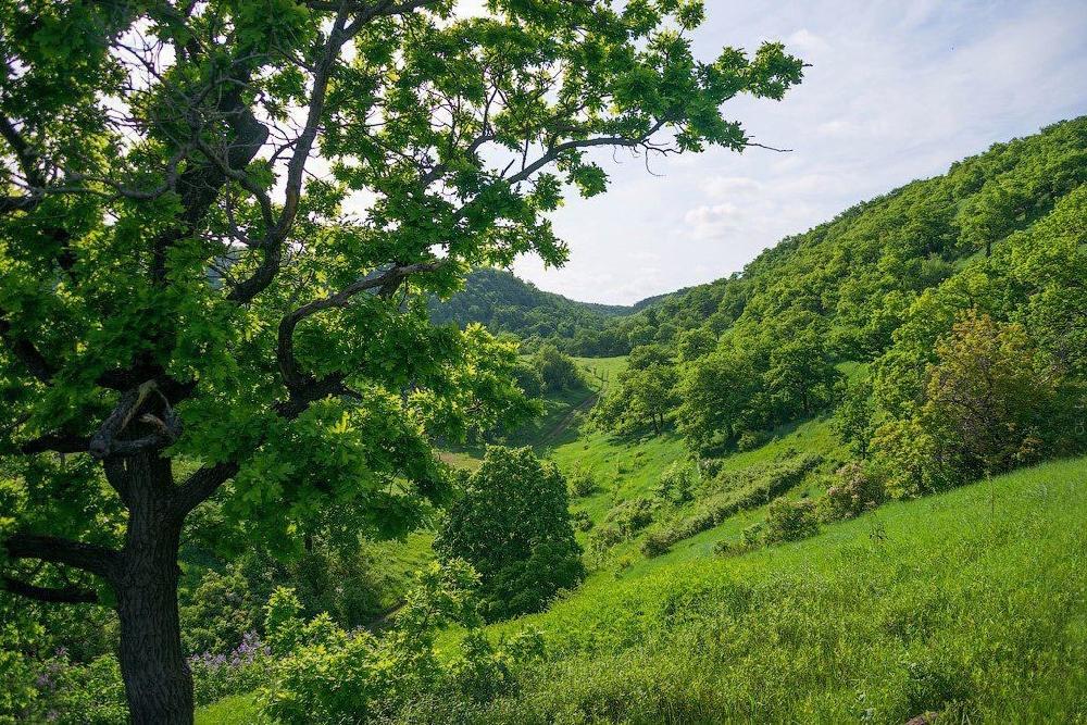 Деревья и кустарники Саратовской области