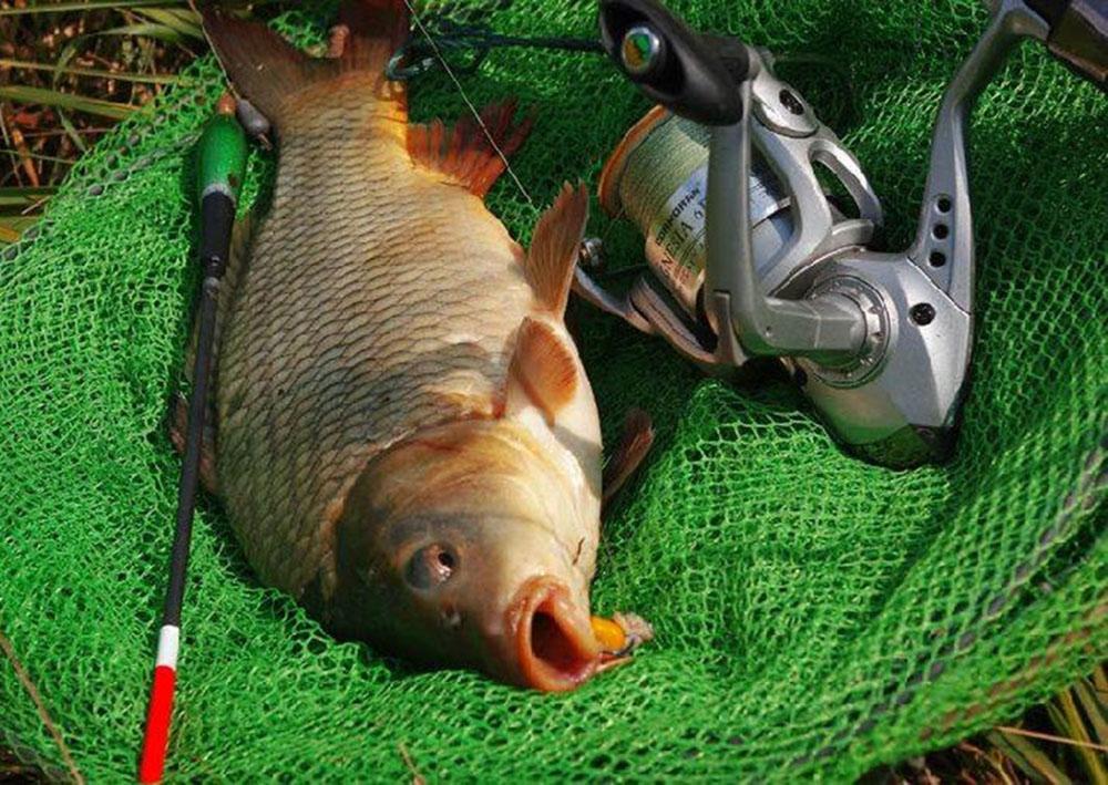Ловля рыбы на поплавочную удочку