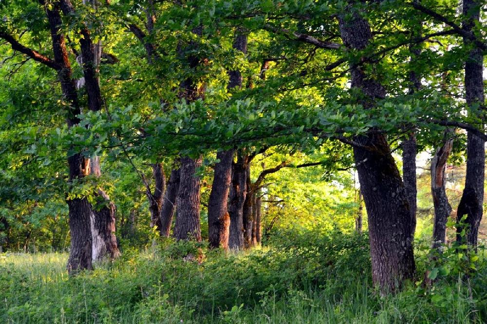 Грибы, растущие в дубравах