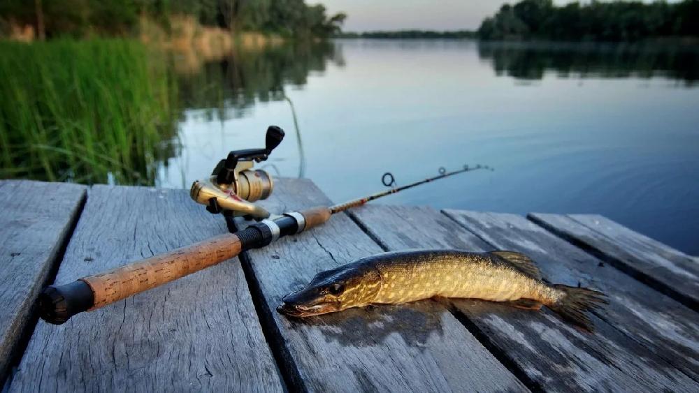 Рыболовные места на Волге