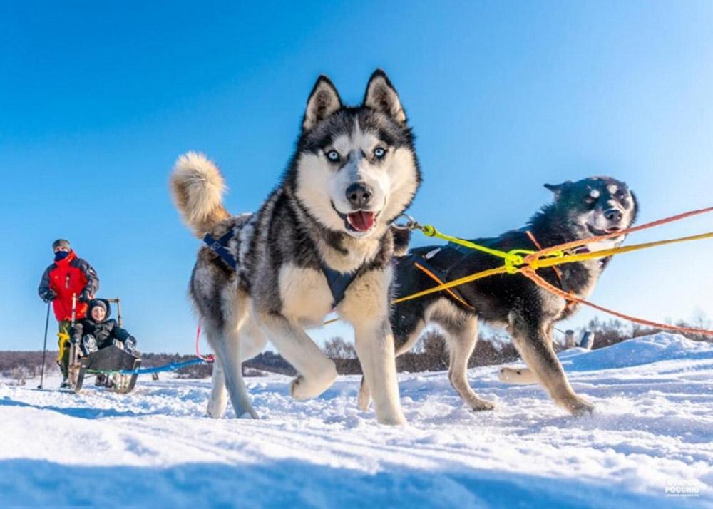 Путешествие в гости к снежным собакам