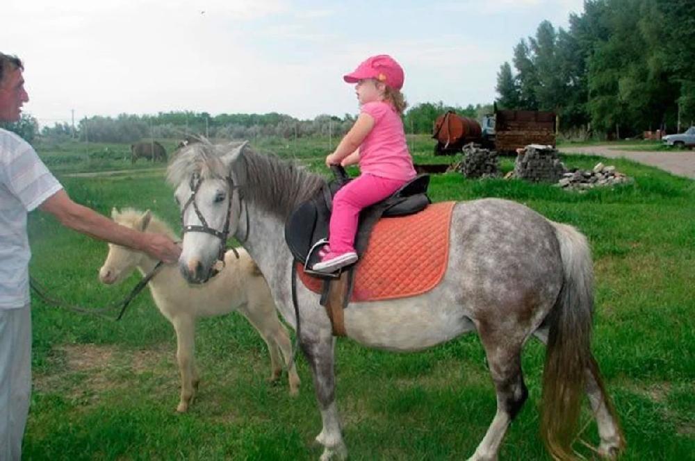 Зоопарки и места, где дети могут пообщаться с животными в Саратове