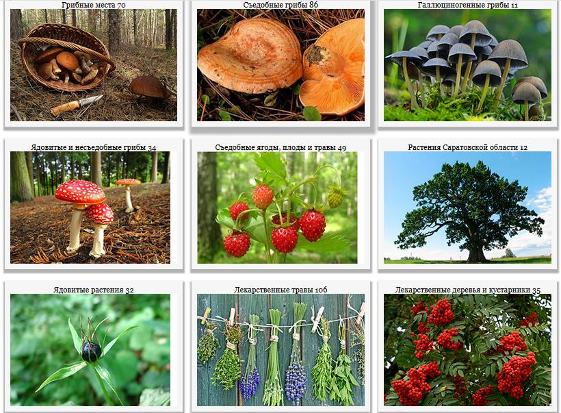 Сбор грибов и ягод Растительный мир