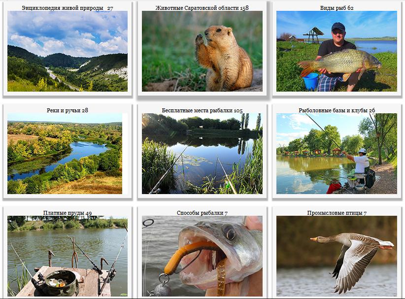 Рыбалка и охота Животный мир