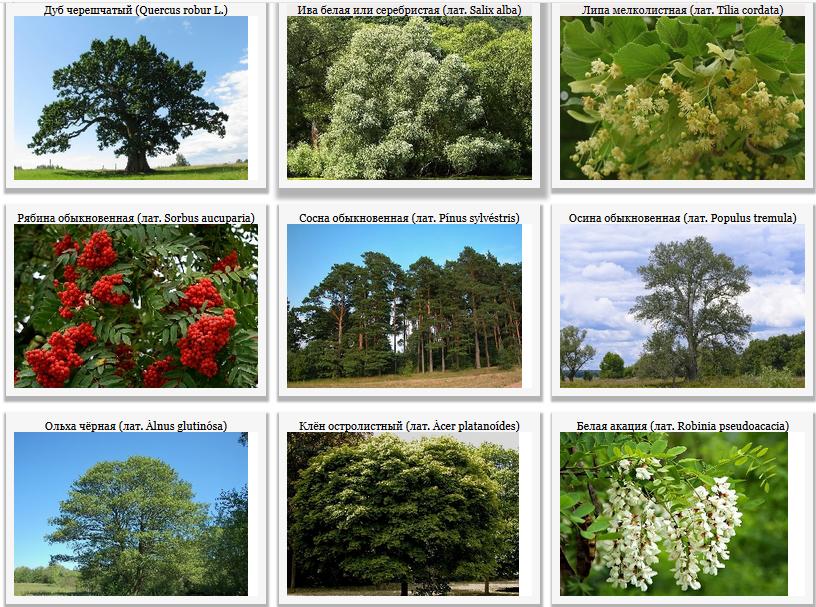 Растения Саратовской области