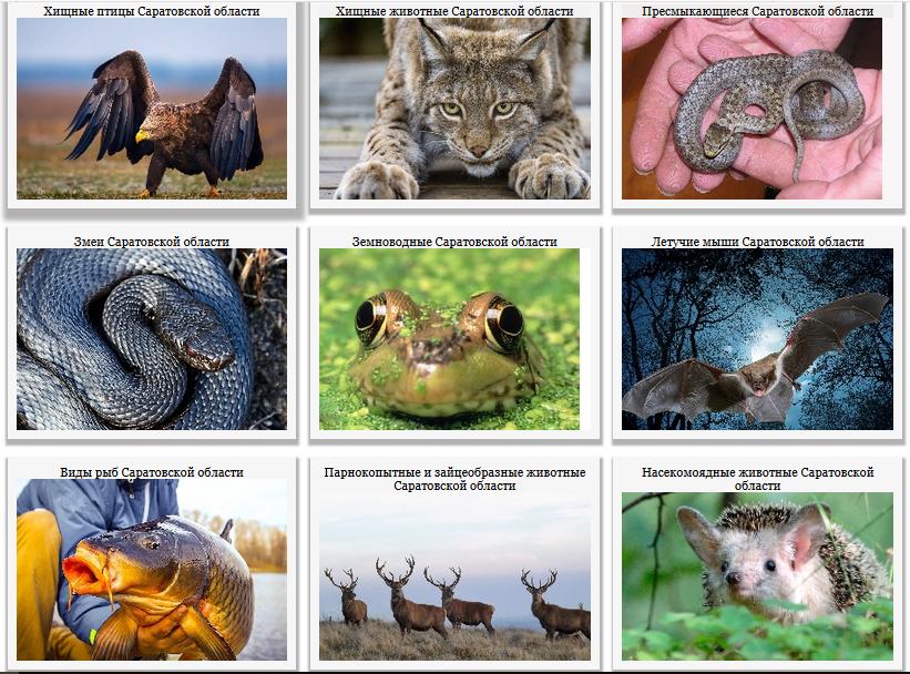 Энциклопедия живой природы Животные