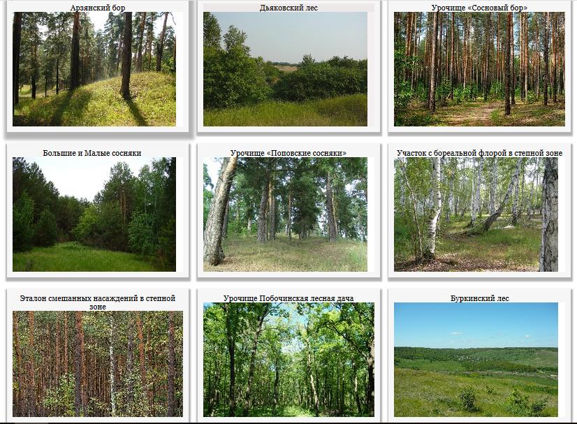 Лесные