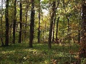 Лес Большой дол