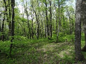 Природный парк «Кумысная поляна»