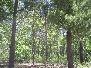 Большемеликские леса