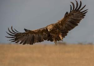 Все хищные птицы Саратовской области