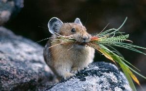 Мыши и другие грызуны Саратовской области