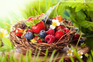 Дикорастущие съедобные ягоды и плоды