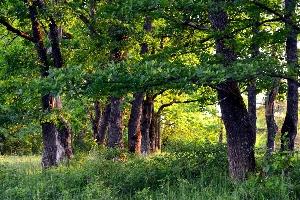 Грибы, растущие в дубравах Саратовской области
