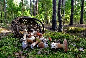 Базарно-карабулакские грибные леса
