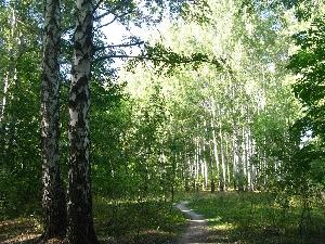 Лесопарк Лесной или Тинь-Зинь