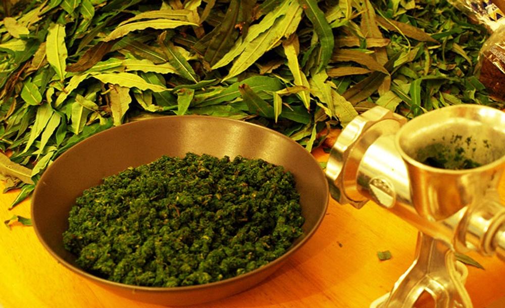 Скручивание листочков иван-чая