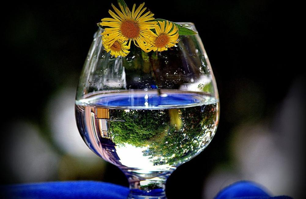 Вино из цветков мать и мачехи