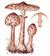 Гриб-зонтик пёстрый (Macrolepiota procera)