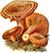 Рыжик настоящий (лат. Lactarius deliciosus)