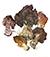 Строчок обыкновенный (Gyromitra esculenta)