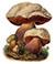 Сатанинский гриб (Boletus satanas)