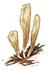 Рогатик язычковый (Clavariadelphus ligula)