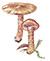Паутинник обыкновенный (Cortinarius triviah)