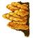 Трутовик серно-жёлтый, или Куриный гриб (Laetiporus sulphureus)