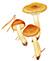 Рядовка чешуйчатая, или сластушка (Tricholoma imbricatum)