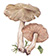 Полевик ранний (Agrocybe praecox)