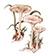 Говорушка беловатая (лат. Clitocybe rivulosa)