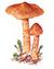 Паутинник благородный (лат. Cortinarius gentilis)