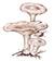 Говорушка гигантская, или Свинуха гигантская (лат. Leucopaxillus giganteus)