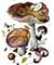 Сыроежка ломкая (лат. Rússula frágilis)
