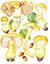 Паутинник триумфальный, или жёлтый (лат. Cortinarius triumphans)