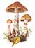Паутинник браслетчатый, или красный (лат. Cortinarius armillatus)