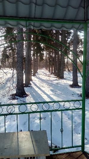Марфинский парк зимой