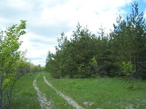 Дорога к грибам